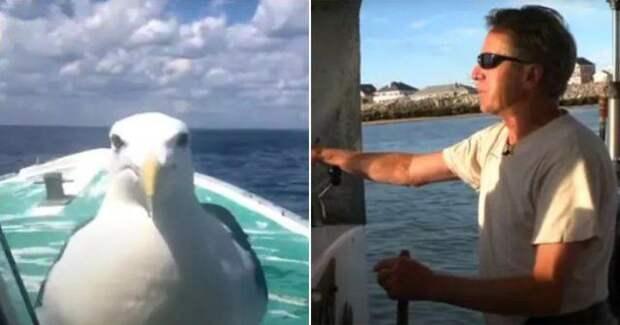 Рыбак спас чайку и обрел друга