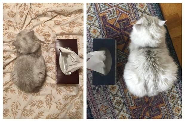 18 примеров, как радикально изменились котики, которых забрали с улицы домой