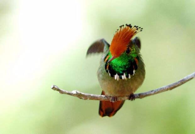 Birds_24 (700x483, 146Kb)