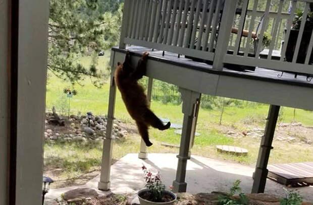 Медвежонок пробрался на балкон дома в Колорадо