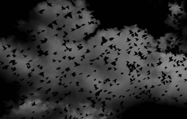 Массовое падение птиц с неба в Карелии – страшное предзнаменование или экологическая катастрофа?
