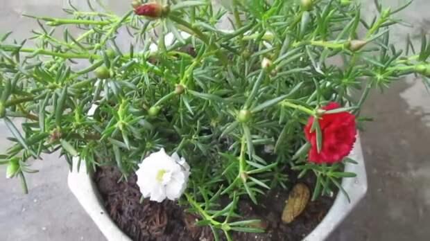 Нектар для домашних цветов: просто взбейте лист алоэ в блендере