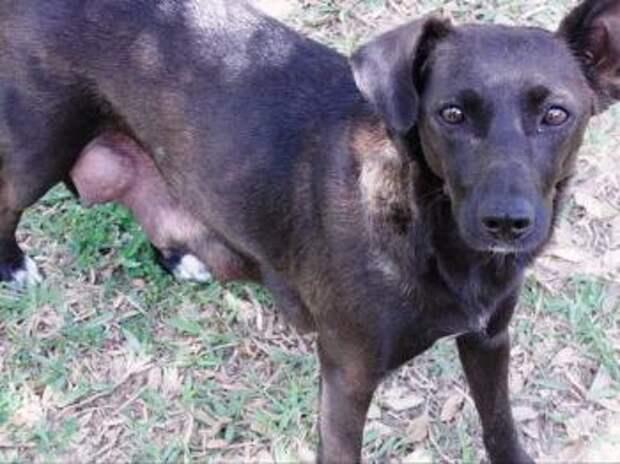 Чтобы найти спасших ее однажды людей, собака преодолела 160 километров