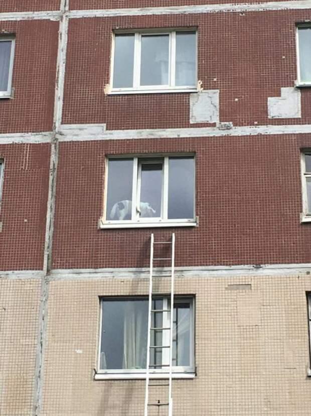 В Петербурге пожарные спасли застрявшую в окне собаку