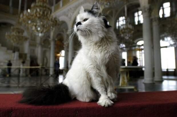 В Эрмитаже, проживает 74 кота, и это не просто так, они исполняют важную для государства службу