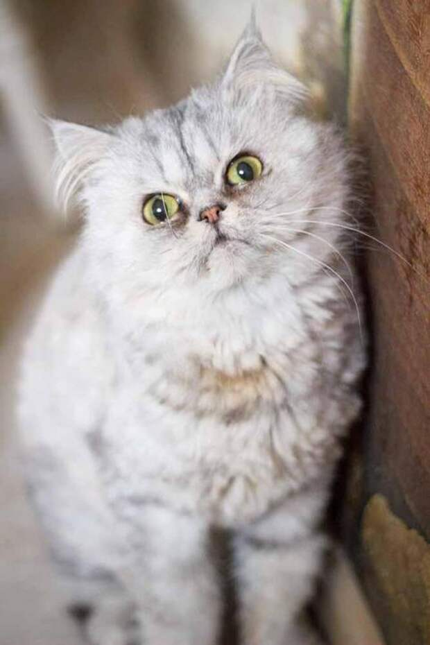 Как породистая идорогая кошка умирала наулице ибыла никому ненужна