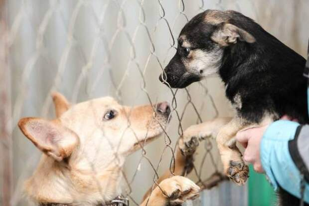 В Курской области суд прикрыл работу компании по отлову бездомных собак