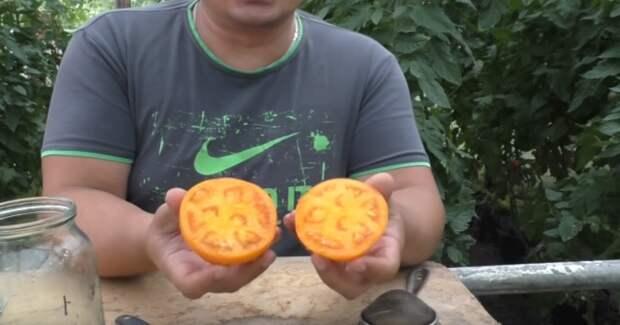 Простые правила для хорошего урожая. Как правильно собрать семена с томата