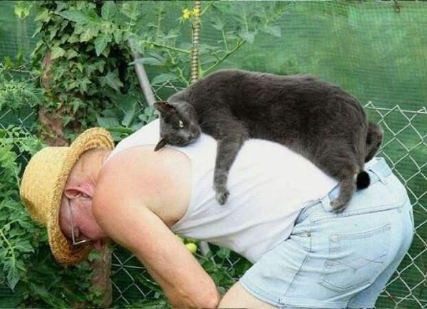 Грустные мысли кота, фото с сайта kotomatrix.ru