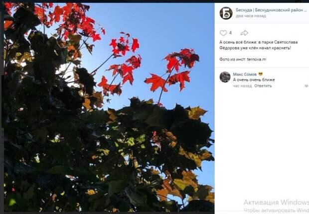 Фото дня: осенние краски бескудниковского клёна