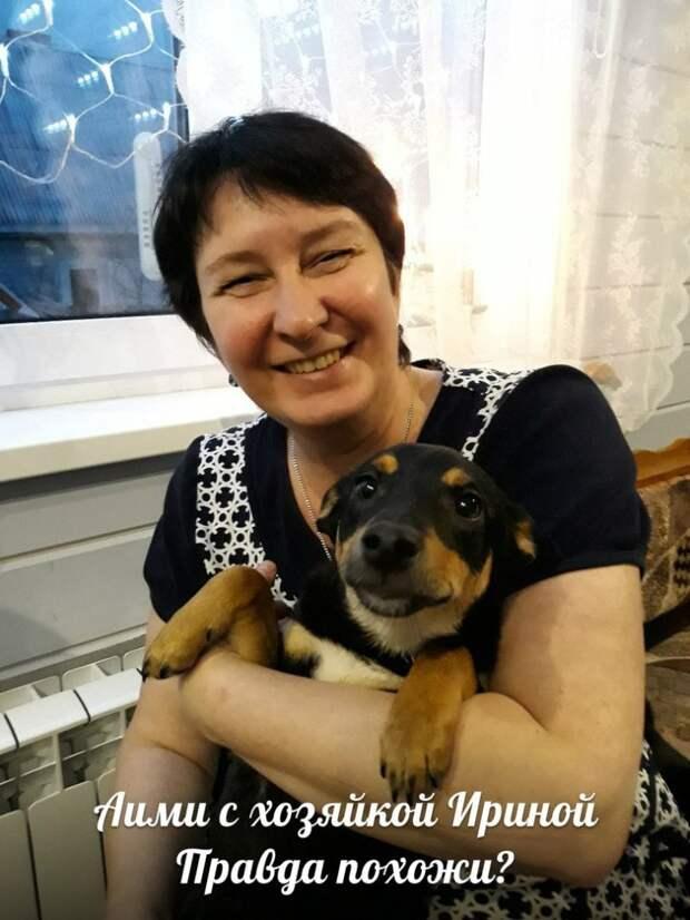 Хозяин принес в приют свою собаку и трех ее щенков маленькая собака, собака, терьер