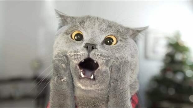 Чем у ваших котов пятки пахнут?