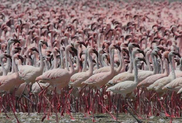 Озеро Богория: место, где можно увидеть около 2 миллионов фламинго