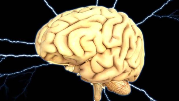 Российские ученые подтвердили зависимость уровня интеллекта от активности мозга