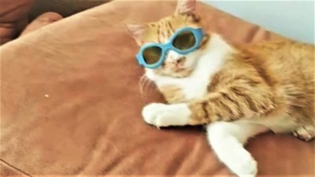Ох уж эти котики и пёсики / Подборка смешных и милых видео с усатыми и хвостатыми