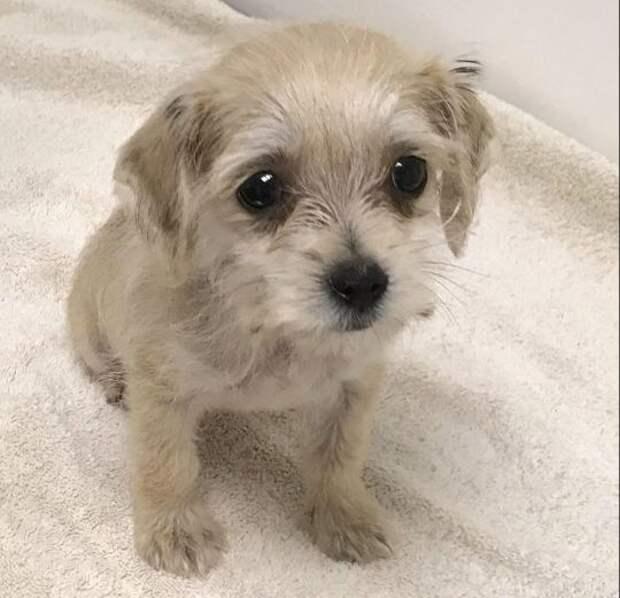 «Найден щенок!»: малыша Рэдли обнаружили в сумке… со связанным лапками