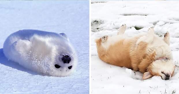 1.  животные, собака, сходство, тюлень