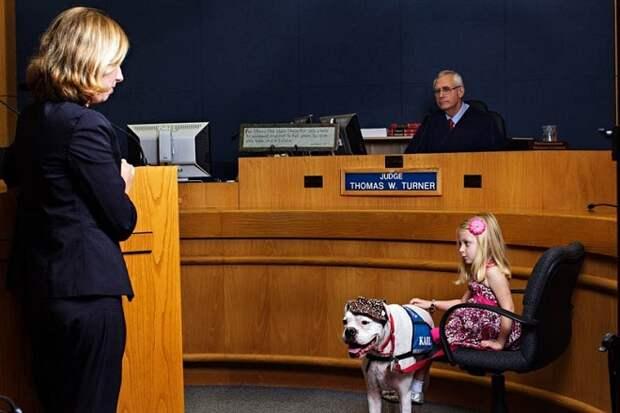 Собака с девочкой в суде