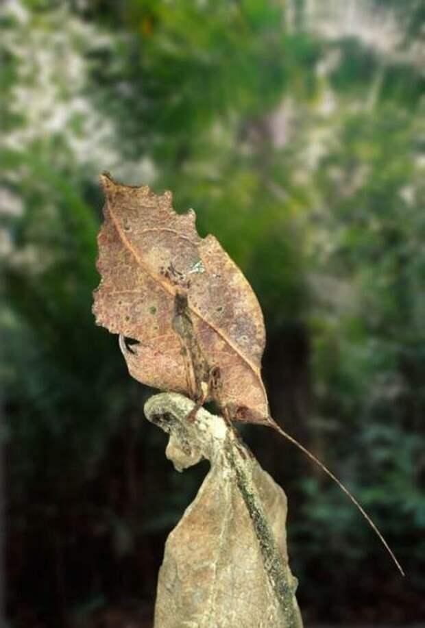 И бабочка животные, интересное, маскировка, мимикрия, попробуй найди, чудо