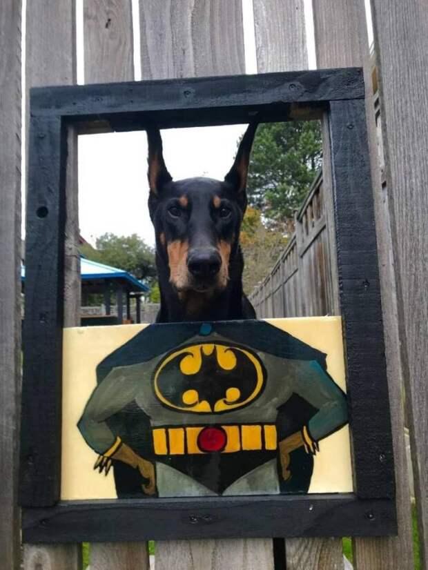 Собака-Бэтмен