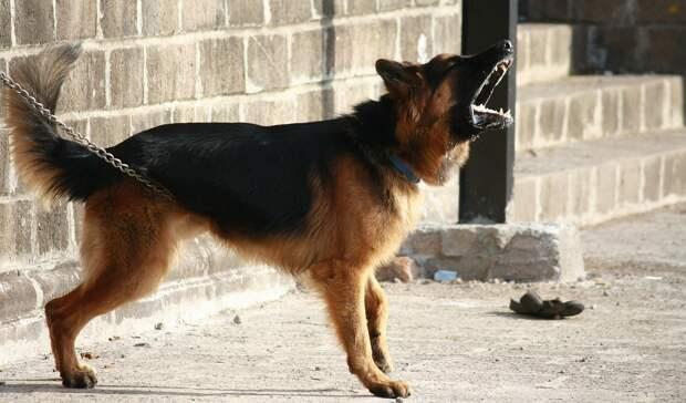 Составлен рейтинг лучших сторожевых собак