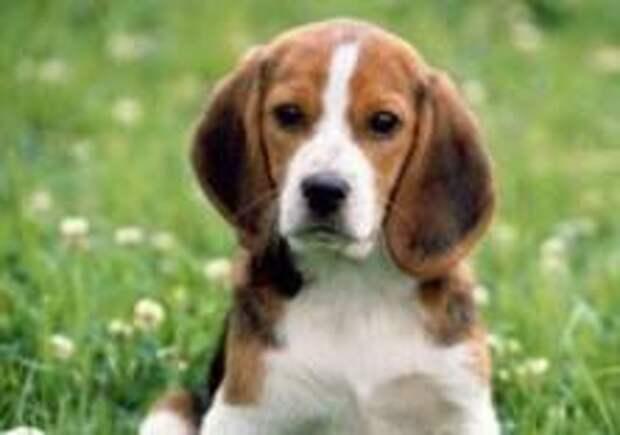 Мэр города запретил собакам лаять