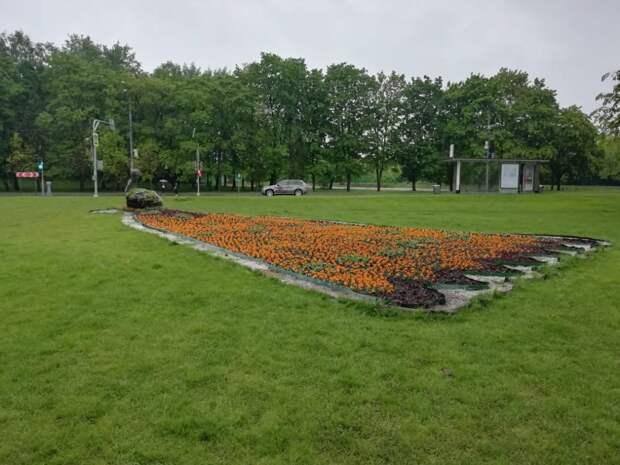 Более 150 тысяч цветов украсят Бабушкинский район в этом году