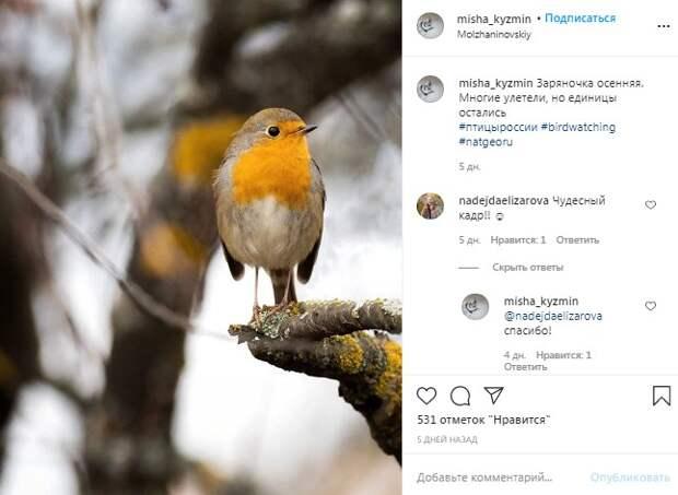 Фото дня: птицы улетели, а зарянка осталась
