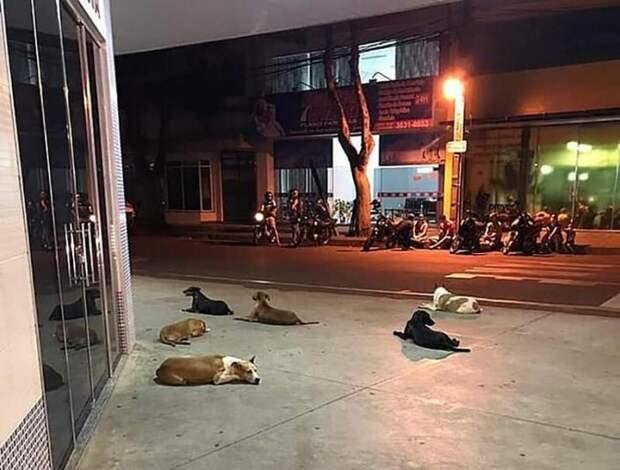 6 дворовых собак отказались бросать своего бездомного хозяина, когда того с инсультом забрала скорая в мире, верность, животные, инсульт, милота, скорая, собака