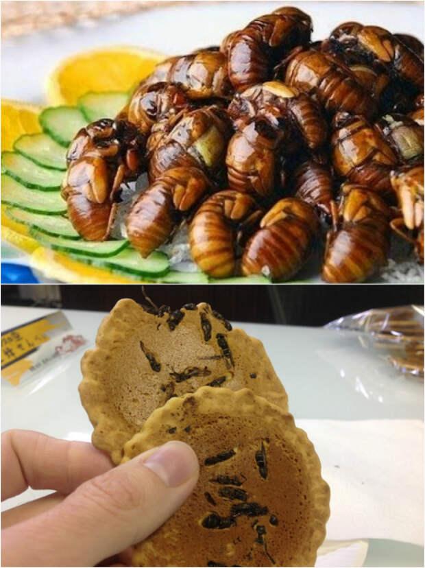 Личинки пчел и рисовое печенье с осами.