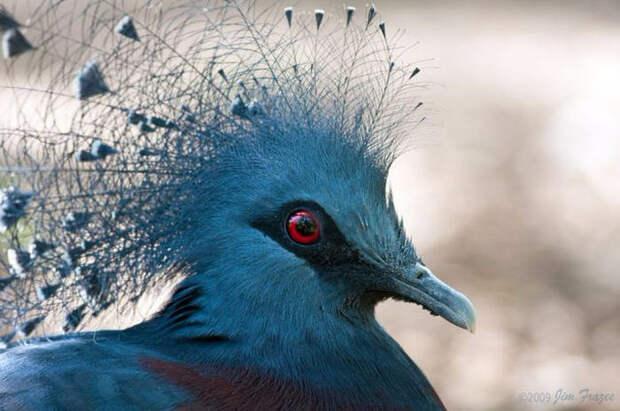 Birds_13 (700x465, 256Kb)