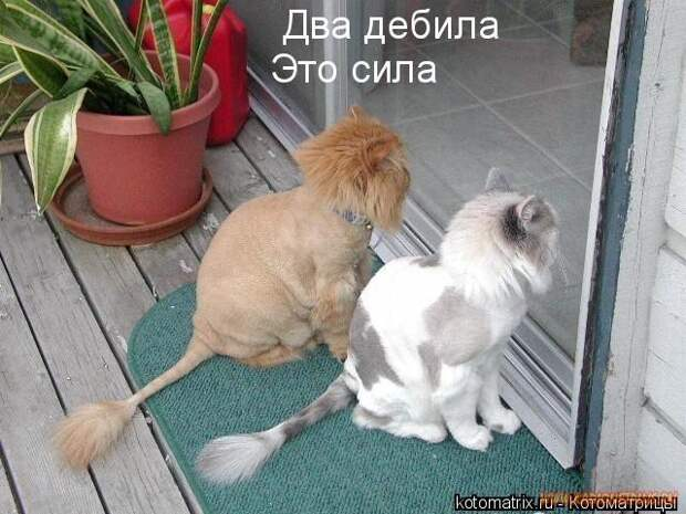 Животный позитивчик