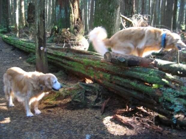 Сосед перелез через забор, увидев, как хозяин издевается над псом