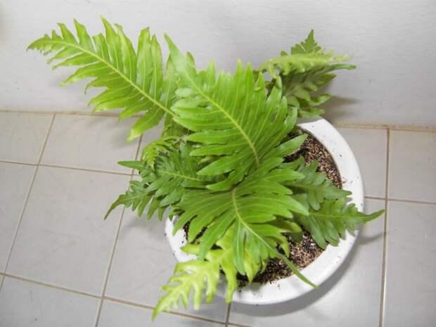 какие есть комнатные растения