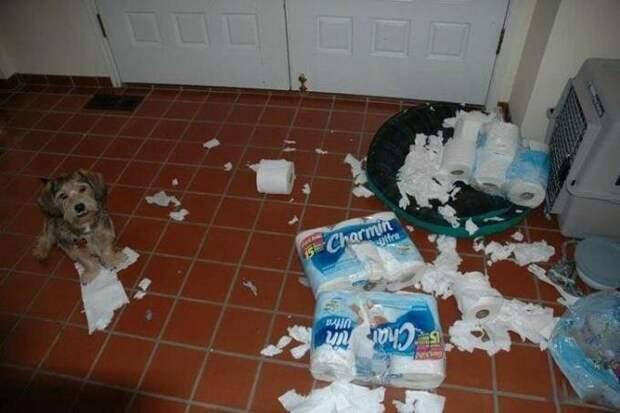 Тестируют туалетную бумагу домашний питомец, животные, подборка, прикол, собака, юмор