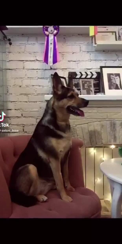 собака в кресле