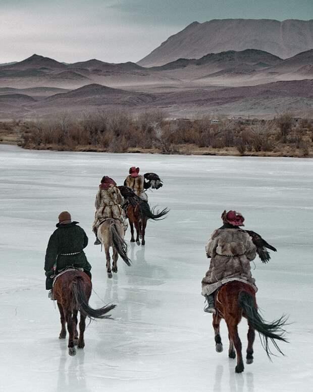 Казахи в Монголии: охота с беркутами