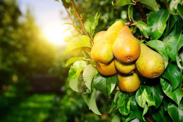 10 садовых культур, которые нельзя сажать в тени