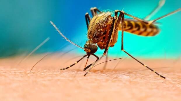 Ученые рассказали о новом заболевании, которое переносят комары в России