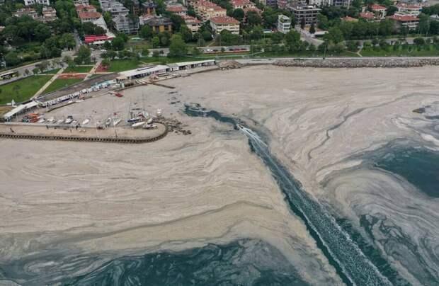 Откуда взялась «морская слизь» у берегов Турции, и может ли море превратиться в болото