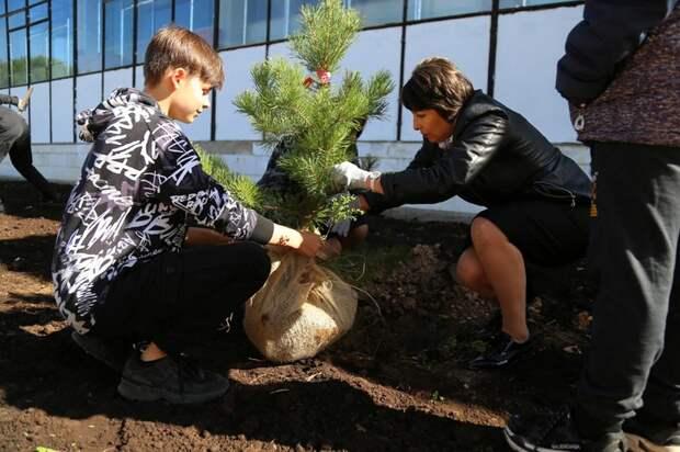 Аллею из 19 сосен высадили в Ижевске в память о Надежде Курченко