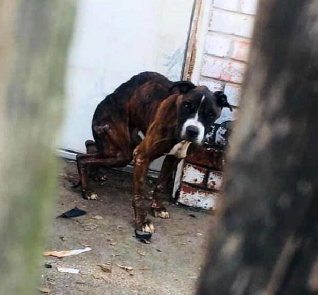 За забором раздавался плач, и девушка почувствовала, что живое существо умоляет ее о помощи