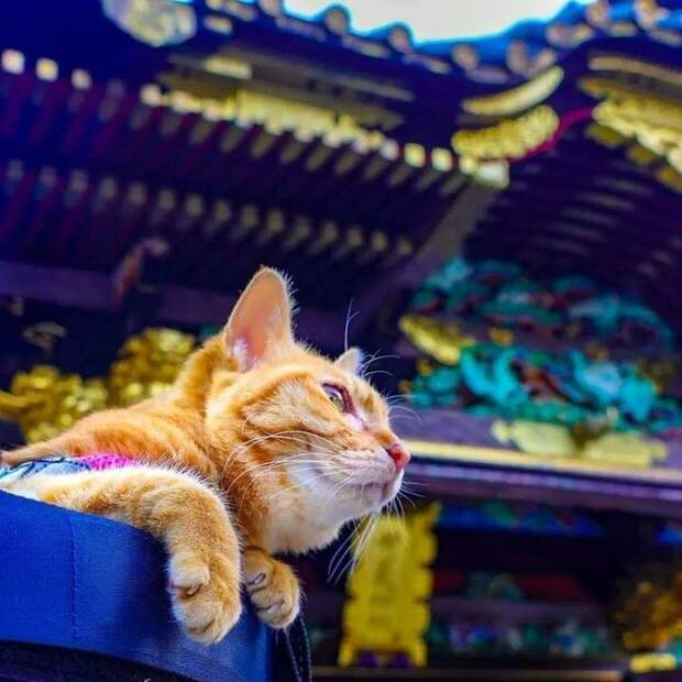 Другим частым «компаньоном» является рюкзак, в котором обе кошки наслаждаются прогулками по красивым местам в мире, домашний питомец, животные, кошки, люди, природа, путешествие