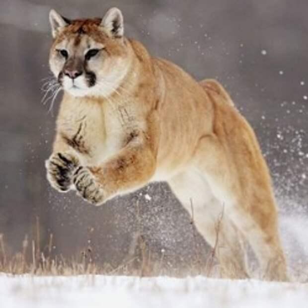 10 животных с уникальными навыками