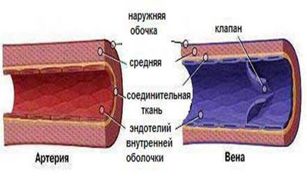 Мочевая кислота. Мясо и артериальное давление
