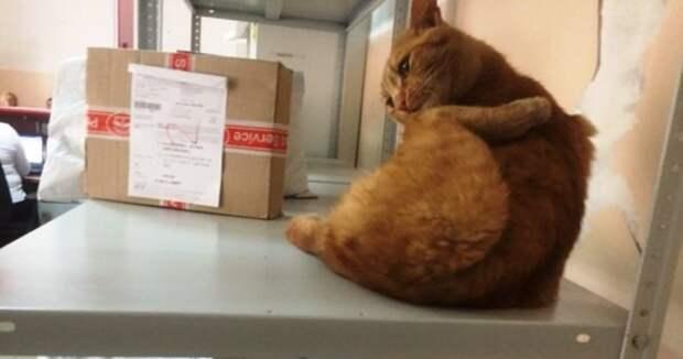 Кот из Омска лишился хозяев и устроился на работу в «Почту России»