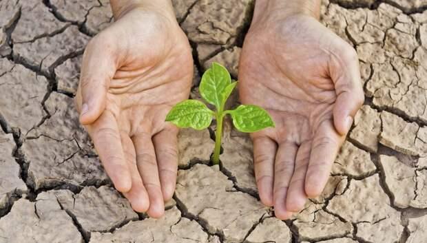 Как защитить растения от жары в знойное лето