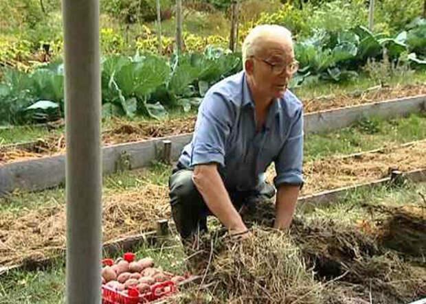 Присмотритесь к сидератам. Иван Парфентьевич Замяткин о многократном увеличении урожая