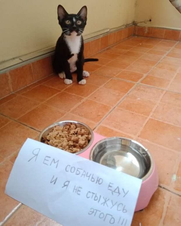 15+ котиков, которые наворотили дел и признались в этом