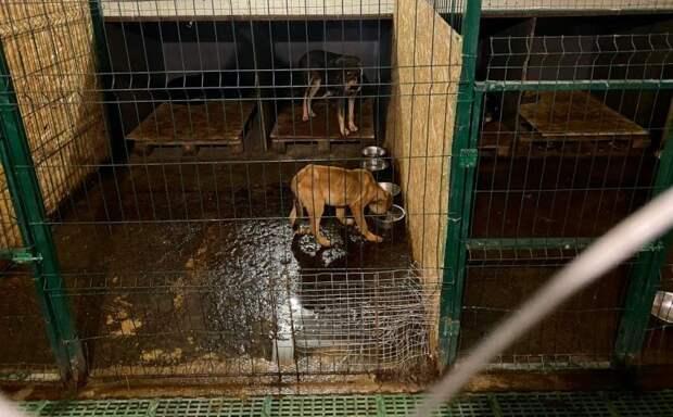 Севастополь разорвет контракт с создателями концлагеря для животных